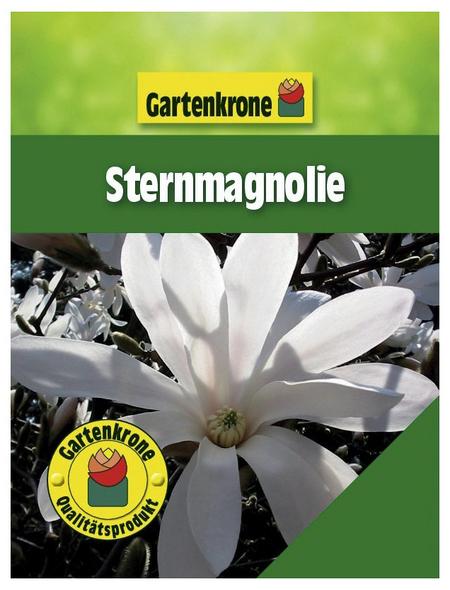 GARTENKRONE Sternmagnolie, Magnolia stellata, weiß, winterhart