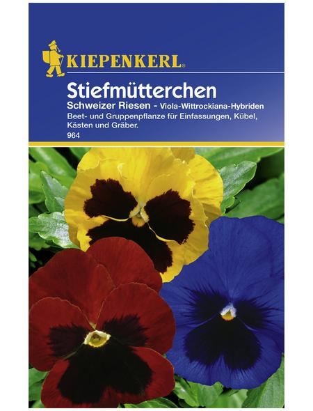 KIEPENKERL Stiefmütterchen, Viola-Wittrockiana-Hybriden , Samen, Blüte: mehrfarbig