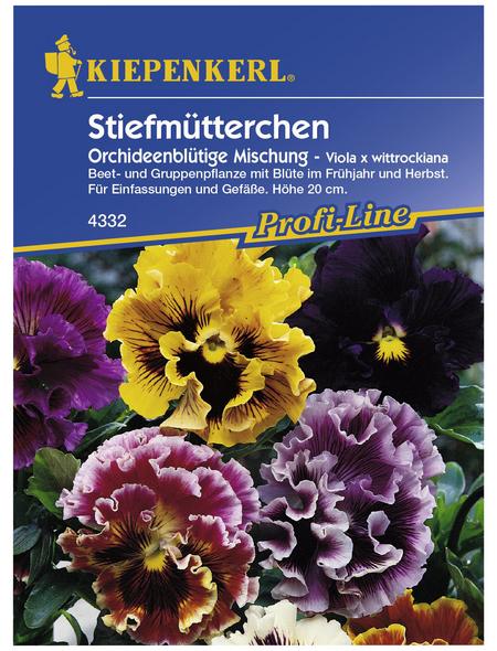 KIEPENKERL Stiefmütterchen, Viola x wittrockiana, Samen, Blüte: mehrfarbig