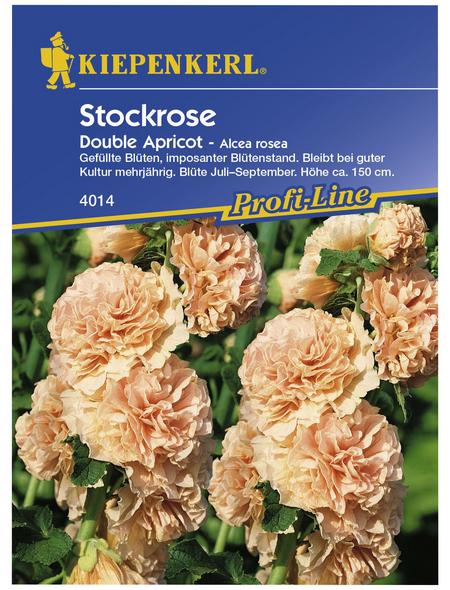 KIEPENKERL Stockmalve, Alcea rosea, Samen, Blüte: apricot