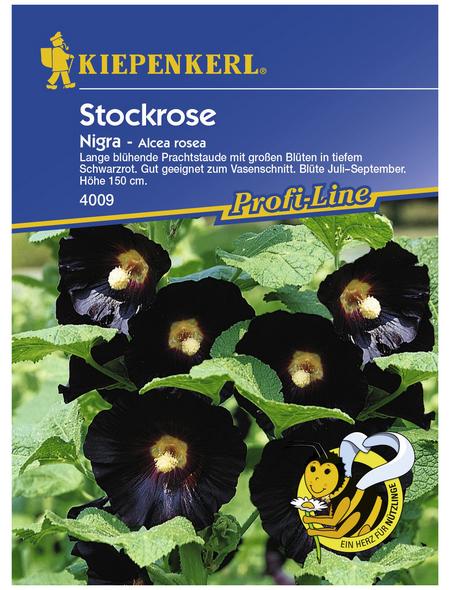 KIEPENKERL Stockrose, Alcea ficifolia, Samen, Blüte: schwarz