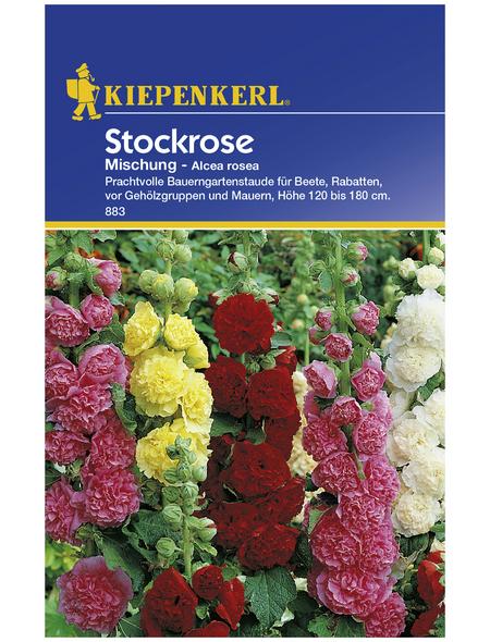 KIEPENKERL Stockrose, Alcea rosea, Samen, Blüte: mehrfarbig