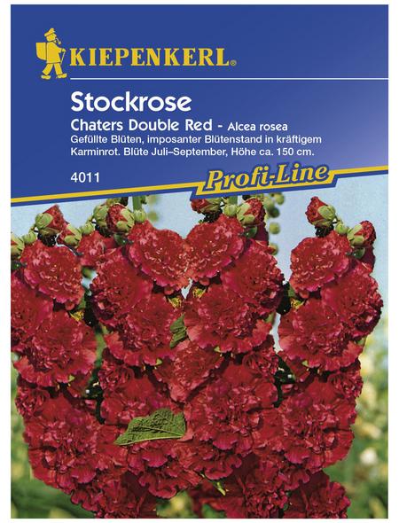 KIEPENKERL Stockrose, Alcea rosea, Samen, Blüte: rot