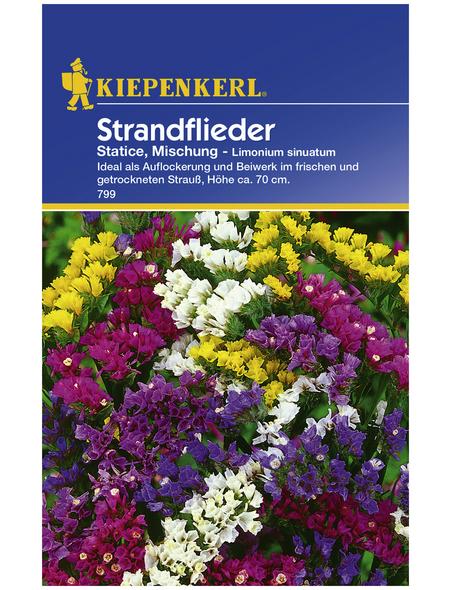 KIEPENKERL Strandflieder, Limonium sinuatum, Samen, Blüte: mehrfarbig