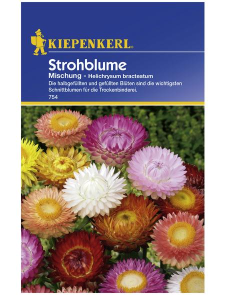 KIEPENKERL Strohblume, Helichrysum bracteatum, Samen, Blüte: mehrfarbig