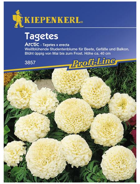 KIEPENKERL Studentenblume, Tagetes erecta, Samen, Blüte: weiß