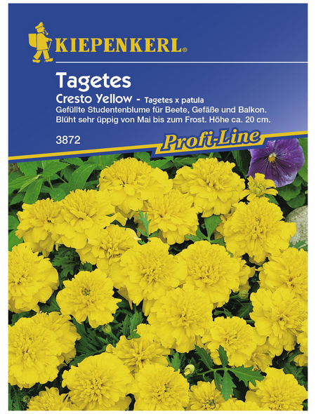 KIEPENKERL Studentenblume, Tagetes patula, Samen, Blüte: gelb