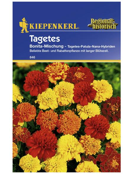KIEPENKERL Studentenblume, Tagetes patula, Samen, Blüte: mehrfarbig