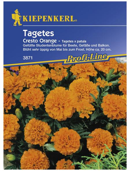 KIEPENKERL Studentenblume, Tagetes patula, Samen, Blüte: orange