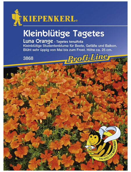 KIEPENKERL Studentenblume, Tagetes tenuifolia, Samen, Blüte: orange