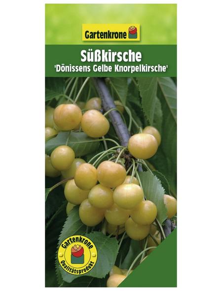 GARTENKRONE Süßkirsche, Prunus avium »Dönissens Gelbe«, Früchte: süß, zum Verzehr geeignet