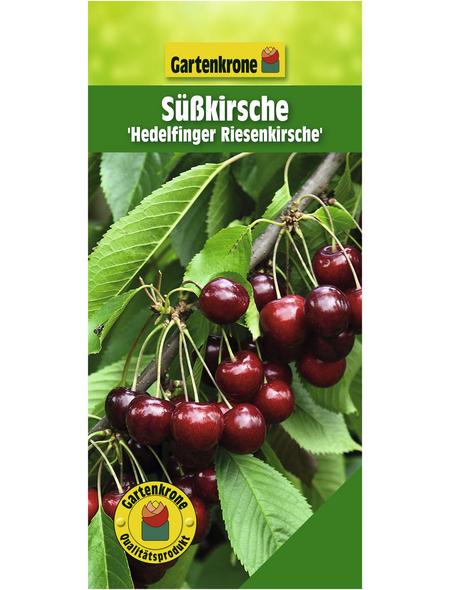 GARTENKRONE Süßkirsche, Prunus avium »Hedelfinger Riesenkirsche«, Früchte: süß, zum Verzehr geeignet