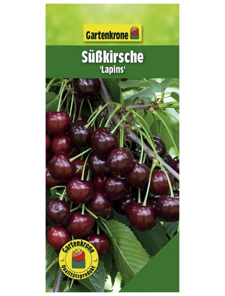 GARTENKRONE Süßkirsche, Prunus avium »Lapins«, Früchte: süß, zum Verzehr geeignet