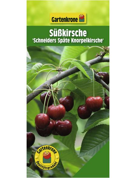 GARTENKRONE Süßkirsche, Prunus avium »Schneiders Späte Knorpel«, Früchte: süß, zum Verzehr geeignet