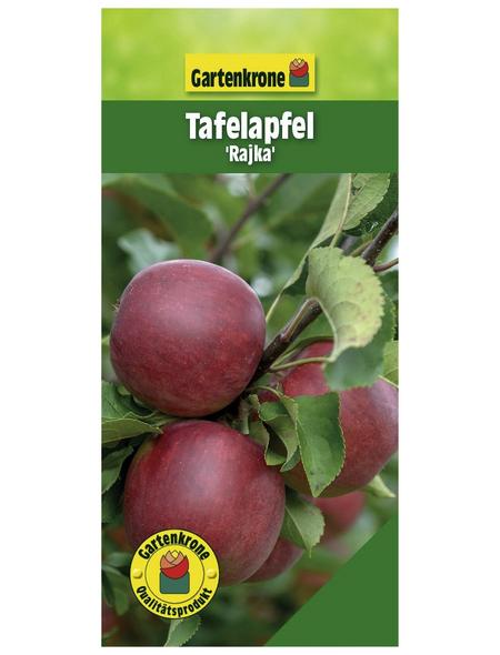 GARTENKRONE Tafelapfel, Malus domestica »Rajka«, Früchte: süß, zum Verzehr geeignet