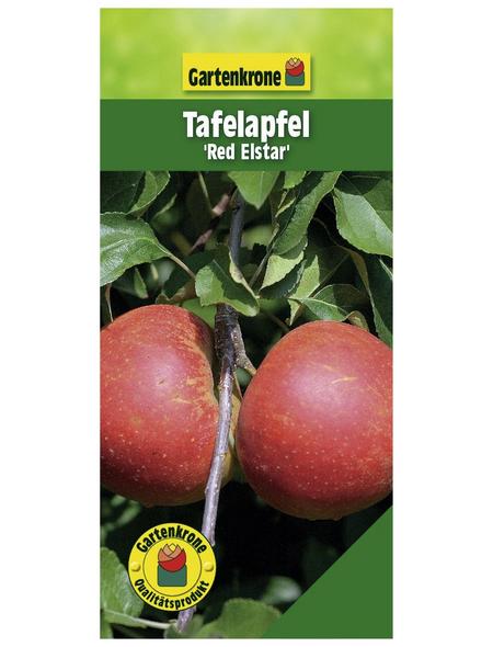GARTENKRONE Tafelapfel, Malus domestica »Red Elstar«, Früchte: süß, zum Verzehr geeignet