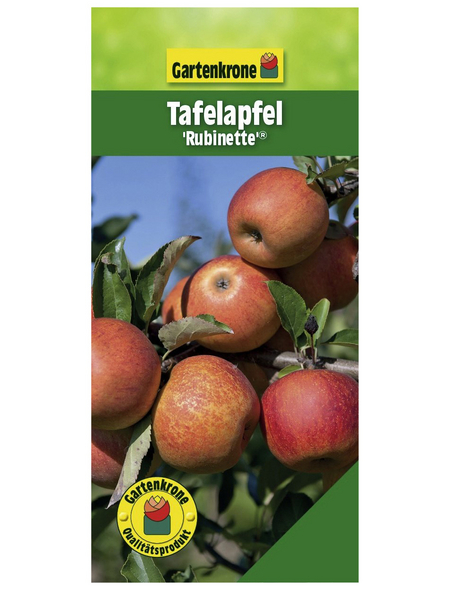 GARTENKRONE Tafelapfel, Malus domestica »Rubinette«, Früchte: süß-säuerlich, zum Verzehr geeignet