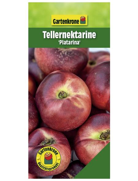 GARTENKRONE Tellernektarine, Prunus nuciperisa »Platarina«, Früchte: süß, zum Verzehr geeignet