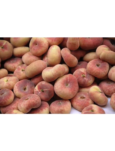 GARTENKRONE Tellerpfirsich, Prunus persica »Paraguayo Delfin«, Früchte: süß, zum Verzehr geeignet