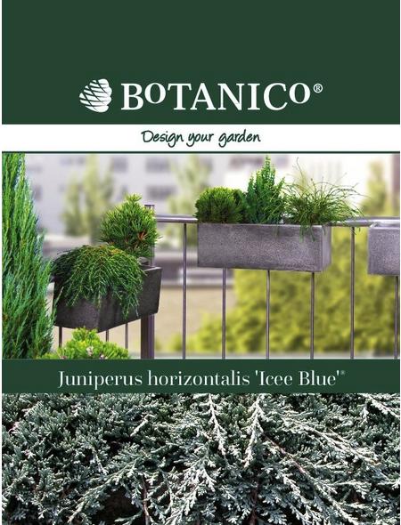 Teppichwacholder horizontalis Juniperus »Icee Blue«