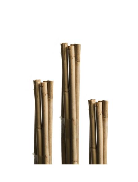 WINDHAGER Tonkinstäbe, Natur, Bambus