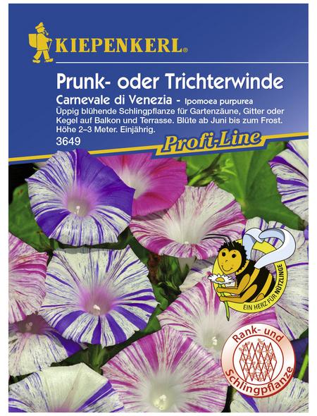 KIEPENKERL Trichterwinde, Ipomoea tricolor, Samen, Blüte: mehrfarbig