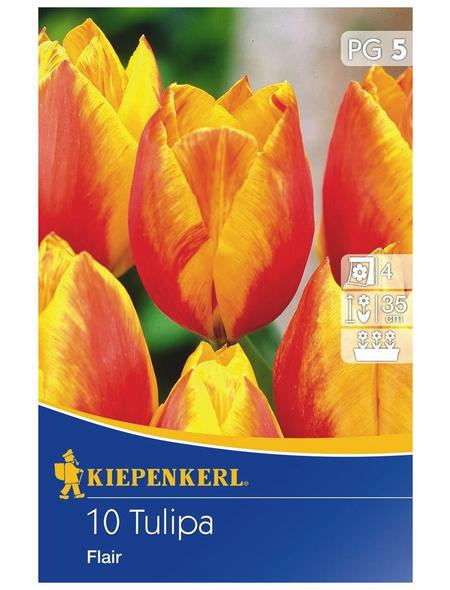KIEPENKERL Tulpe Flair, Mehrfarbig, 10 Blumenzwiebeln