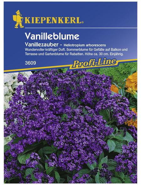 KIEPENKERL Vanilleblume, Heliotropium arborescens, Samen, Blüte: lila