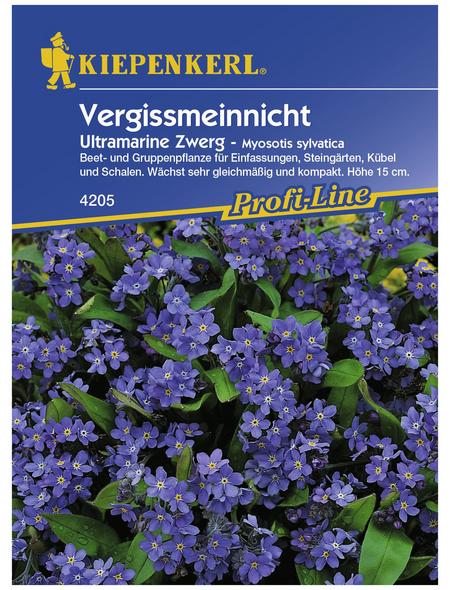 KIEPENKERL Vergissmeinnicht, Myosotis sylvatica, Samen, Blüte: blau