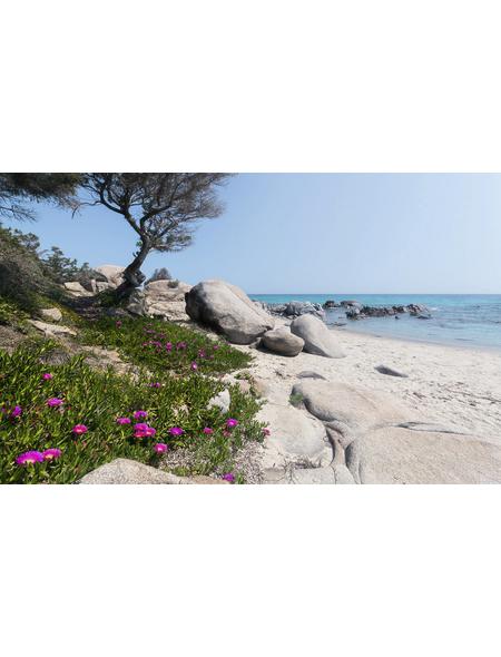 KOMAR Vliestapete »Mediterrane Träume«, Breite 450 cm, seidenmatt