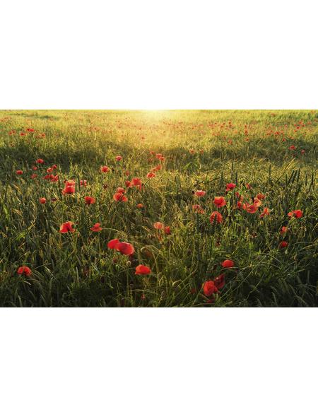 KOMAR Vliestapete »Poppy World«, Breite 450 cm, seidenmatt