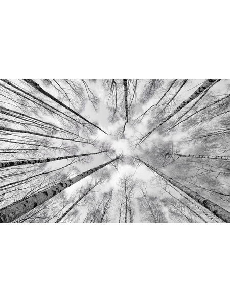 KOMAR Vliestapete »Weiss-Blau«, Breite 450 cm, seidenmatt