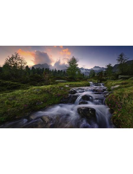 KOMAR Vliestapete »Wild Paradise«, Breite 450 cm, seidenmatt