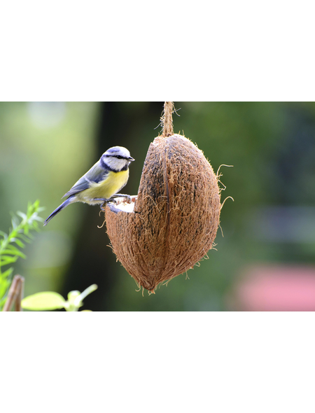 Vogelfutter, Erdnuss / Sonnenblumenkerne, Futtermix