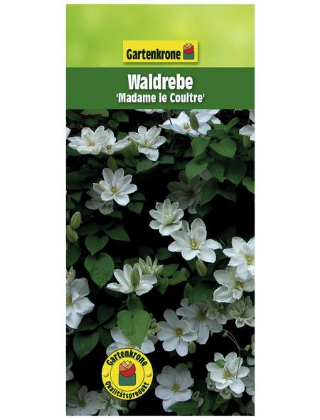 GARTENKRONE Waldrebe, Clematis »Madame Le Coultre«, weiß, winterhart