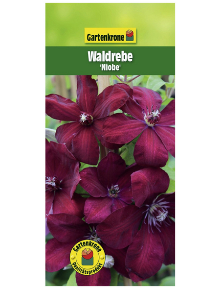 GARTENKRONE Waldrebe, Clematis  »Niobe«, Blüten: rot