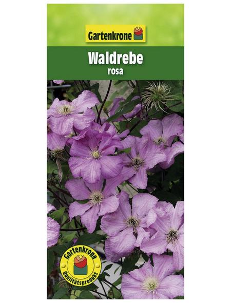 GARTENKRONE Waldrebe, Clematis »Rosa«, Blüten: rosa/pink