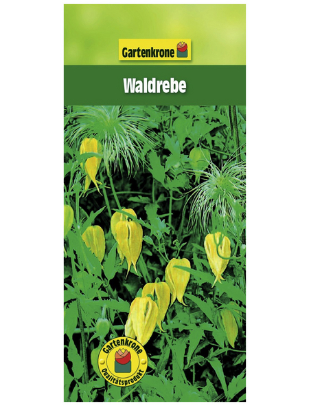 GARTENKRONE Waldrebe, Clematis tangutica, Blüten: gelb