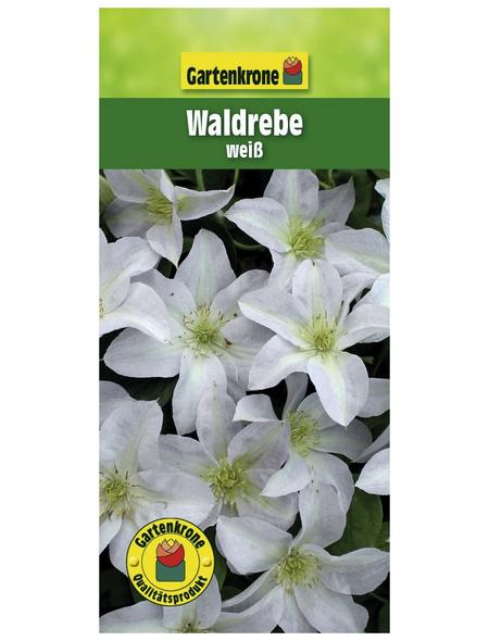 GARTENKRONE Waldrebe, Clematis »Weiß«, Blüten: weiß