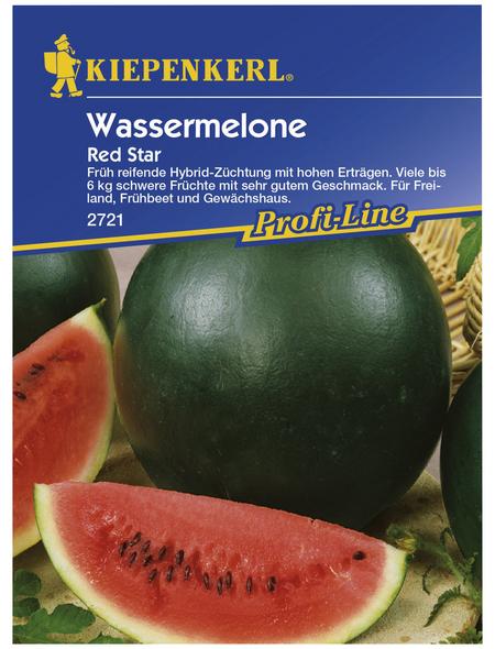KIEPENKERL Wassermelone lanatus Citrullus »Red Star«