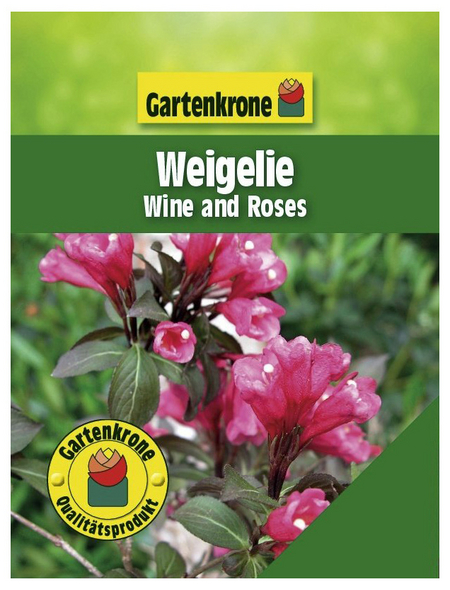 GARTENKRONE Weigelie, Weigela florida »Wine and Roses «, rosa/pink, winterhart