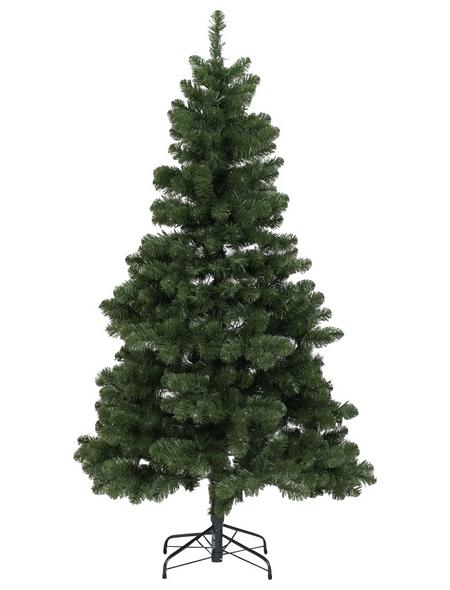 Evergreen Weihnachtsbaum »Oxford Kiefer «, Höhe: 210 cm, grün