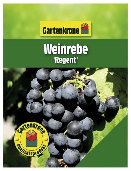 GARTENKRONE Weinrebe Vitis vinifera »Regent«