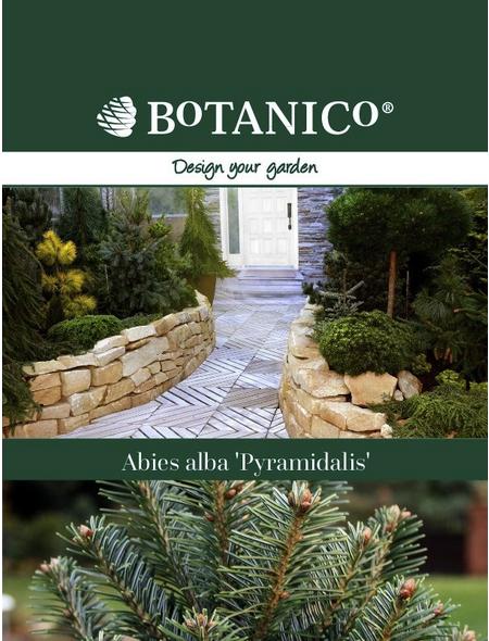 BOTANICO Weißtanne alba Abies »Pyramidalis «