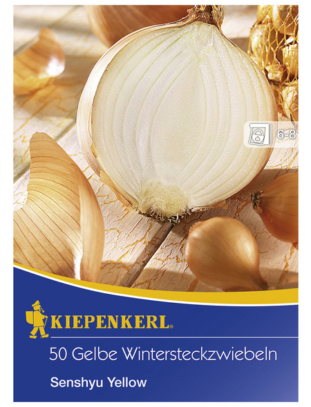 KIEPENKERL Wintersteckzwiebel cepa Allium