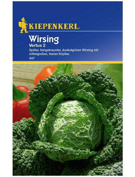 KIEPENKERL Wirsing oleracea var. Sabauda Brassica »Vertus 2«