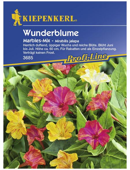KIEPENKERL Wunderblume, Mirabilis jalapa, Samen, Blüte: mehrfarbig