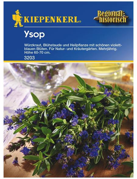 KIEPENKERL Ysop Hyssopus officinalis