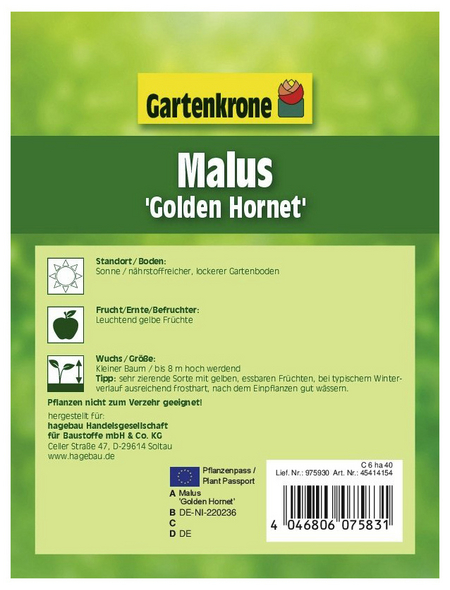 GARTENKRONE Zierapfel, Malus »Golden Hornet«, Blütenfarbe weiß