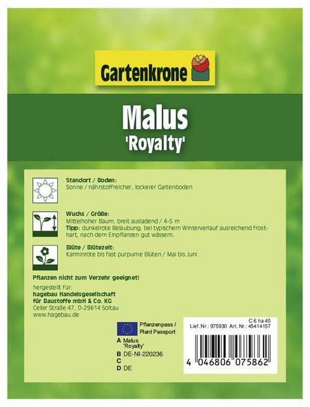 GARTENKRONE Zierapfel, Malus »Royalty«, Blütenfarbe weiß